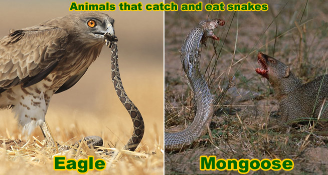 Snake Enemies - Animal...