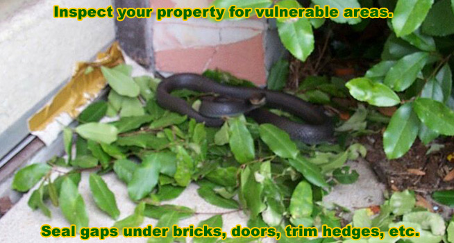 Snake Inspections How Do I Find A Snake