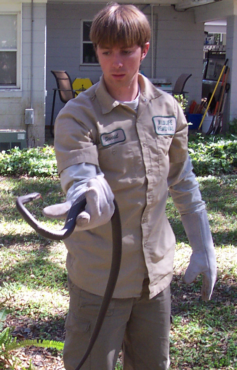 snake removal how to get rid of snakes snake trap repellent