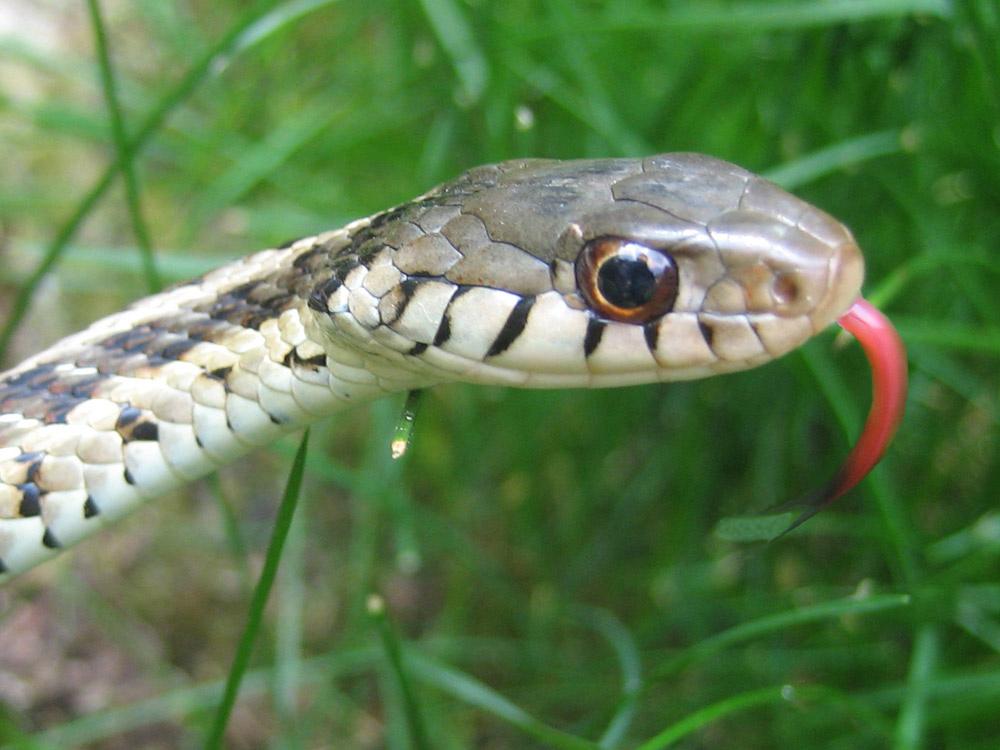 snake - photo #21