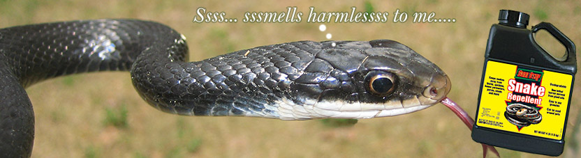 Snake Repellent - Reviews, Ingredients, Plants, Chemicals