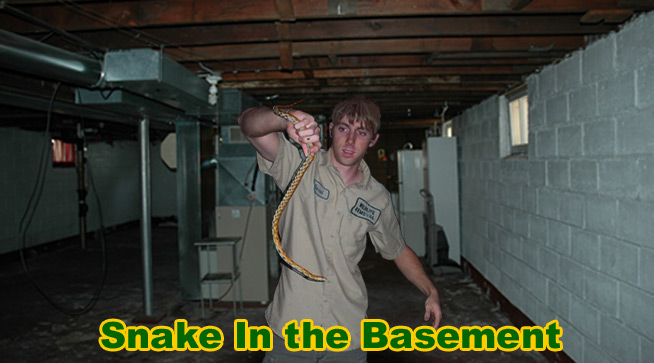 Snake In The Basement How To Get A Snake Out Of The