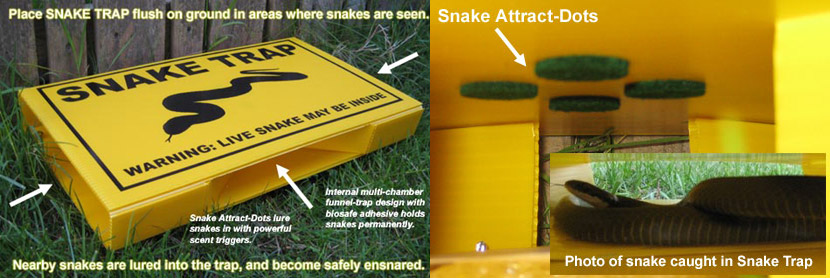 What To Do If And How To Find A Snake In Your House